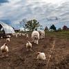 Rettland Farm (17 of 105)