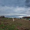 Rettland Farm (74 of 105)