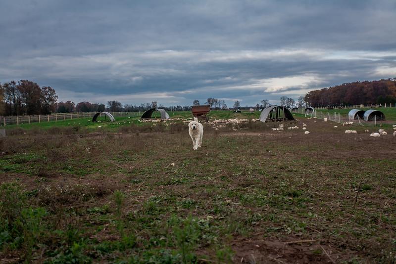 Rettland Farm (73 of 105)