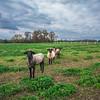 Rettland Farm (46 of 105)