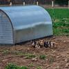 Rettland Farm (86 of 105)