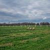Rettland Farm (51 of 105)