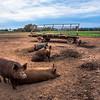 Rettland Farm (98 of 105)
