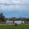 Rettland Farm (8 of 105)