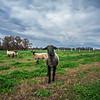 Rettland Farm (48 of 105)