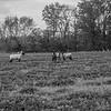 Rettland Farm (42 of 105)