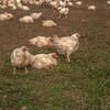 Rettland Farm (14 of 105)