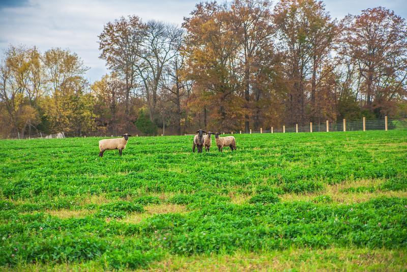 Rettland Farm (40 of 105)