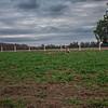 Rettland Farm (52 of 105)