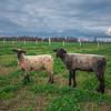 Rettland Farm (47 of 105)