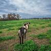Rettland Farm (44 of 105)