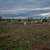 Rettland Farm (71 of 105)