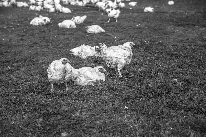 Rettland Farm (15 of 105)
