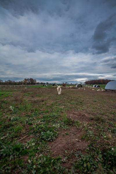 Rettland Farm (76 of 105)