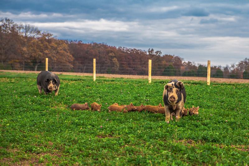 Rettland Farm (27 of 105)