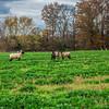 Rettland Farm (41 of 105)