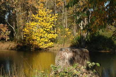 Serene Drakes Creek