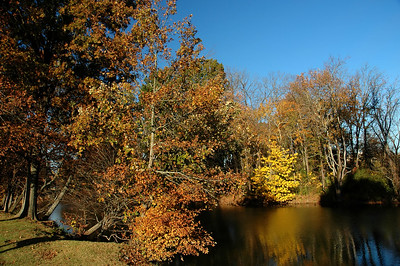 Fall paradise at Drakes Creek
