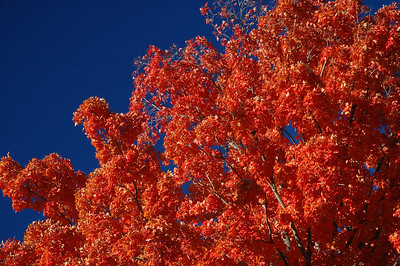 Brilliant red glow against deep blue sky