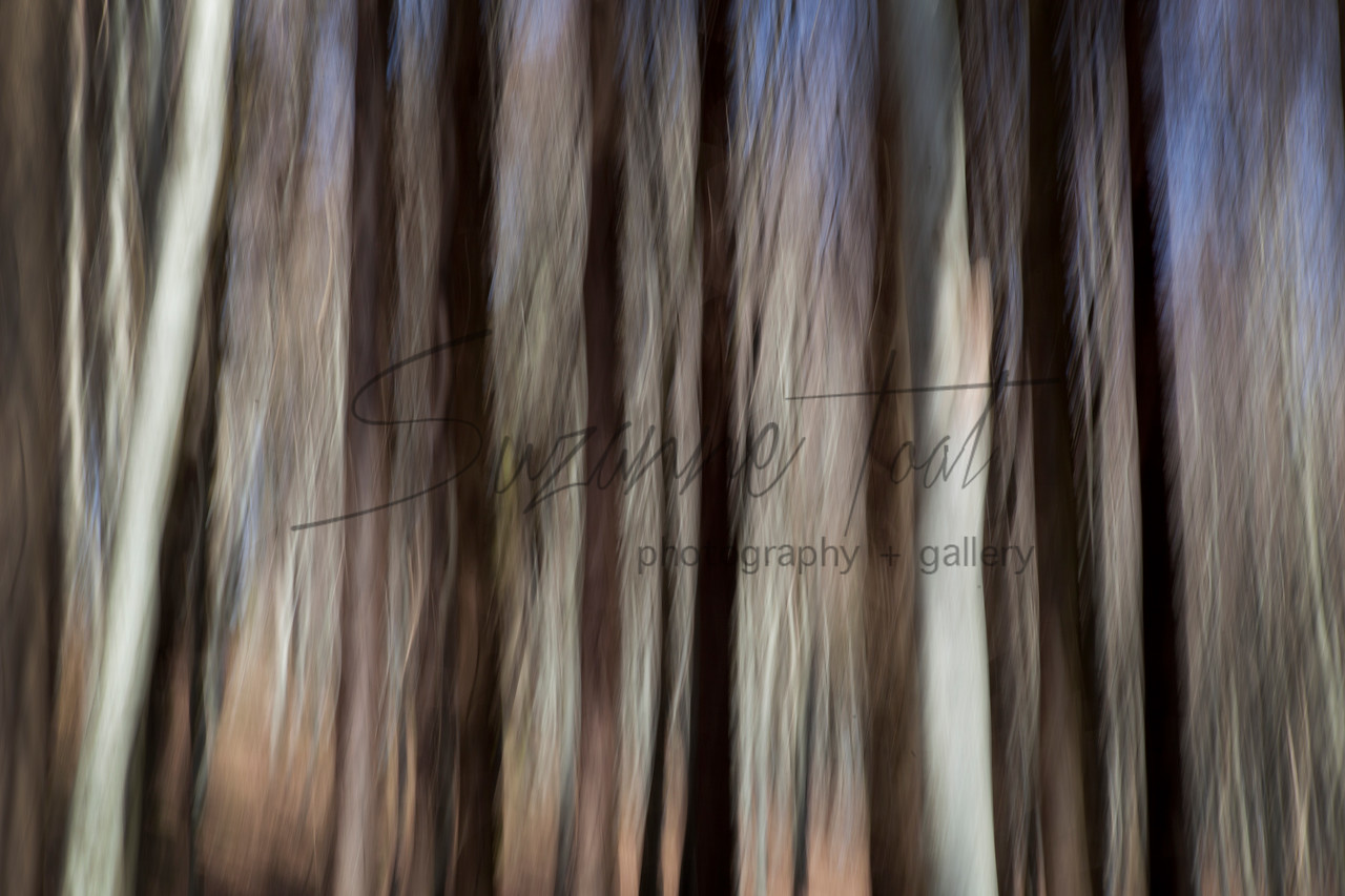 Abstract woods 2