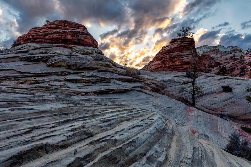 Zion National Park Slick Rock