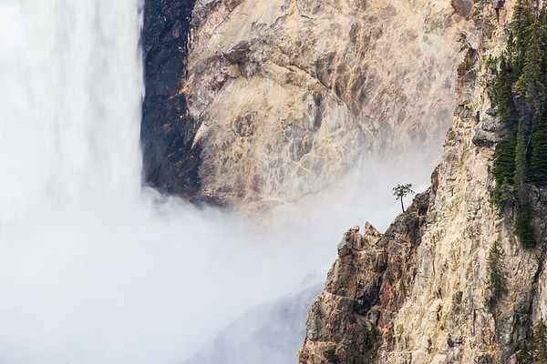 Lone tree Lower falls Wyoming 2 U.S.A.