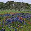 Springtime Palette