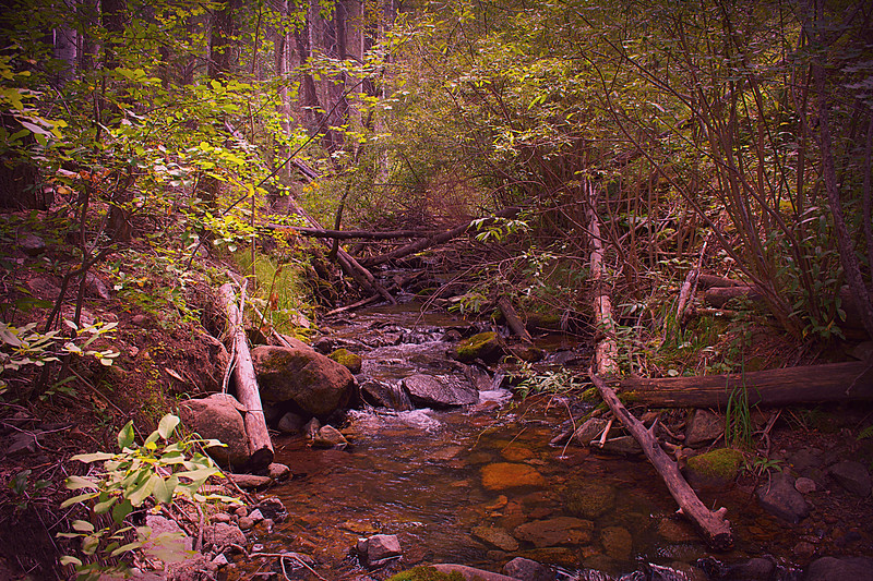 Tranquility Creek