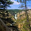 Distant Yellowstone Falls