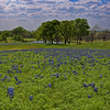 Bluebonnet Pond