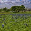 Bluebonnet Pond