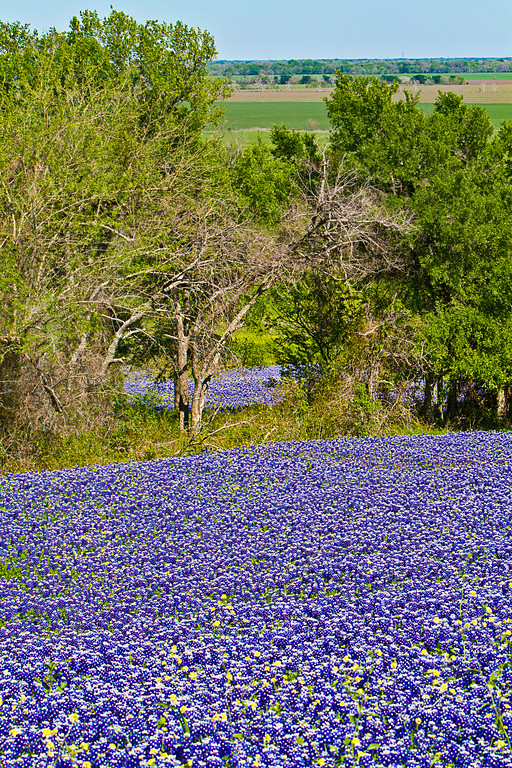 Texas Tapestry-3485