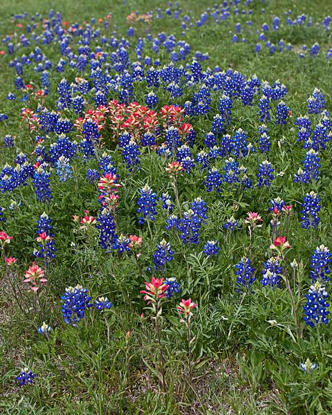 Texas Bouquet