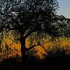 Ngala0713AM-6620 Owl Silhouette