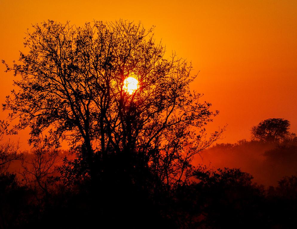Ngala0716AM-8817 Brilliant Sunrise