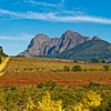 Cape Vineyards (SA)