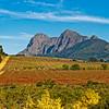 Cape Vineyards (SA)