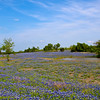 Bluebonnet Ranch