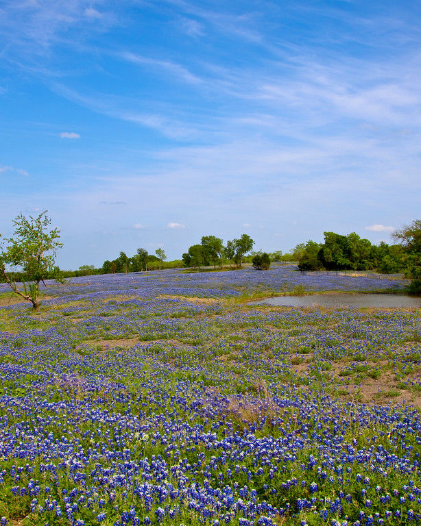 Bluebonnet Ranch