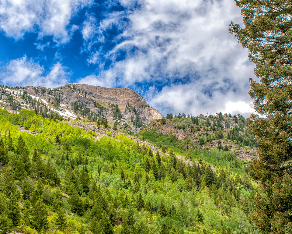 Colorado2016-6475 (AspenHillside)