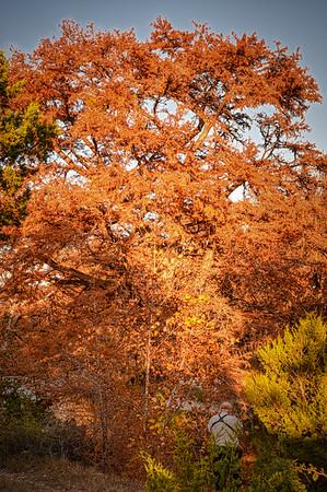 Landscape Images of Big Tree Ranch