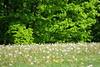 spring mirage