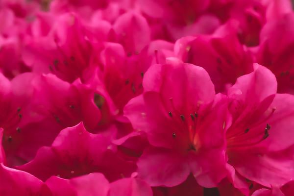 Flowers & Wildflowers