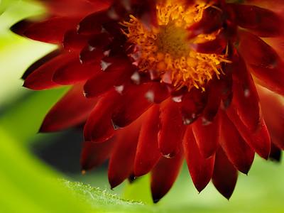 Plants & Flowers