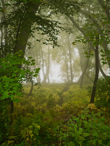 Nature & Landscape
