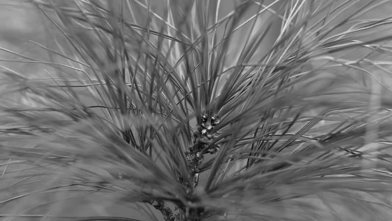2017 Nature: Everything Trees Photo Slideshow