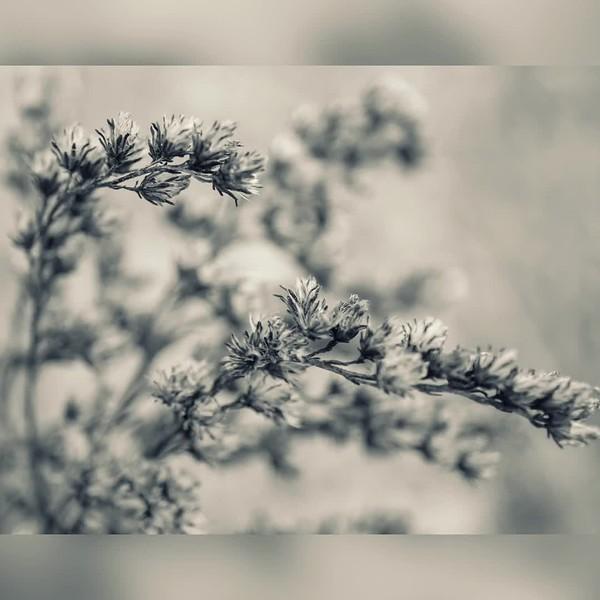 2017 Nature: Weeds, Plants, Berries, etc. Photo Slideshow