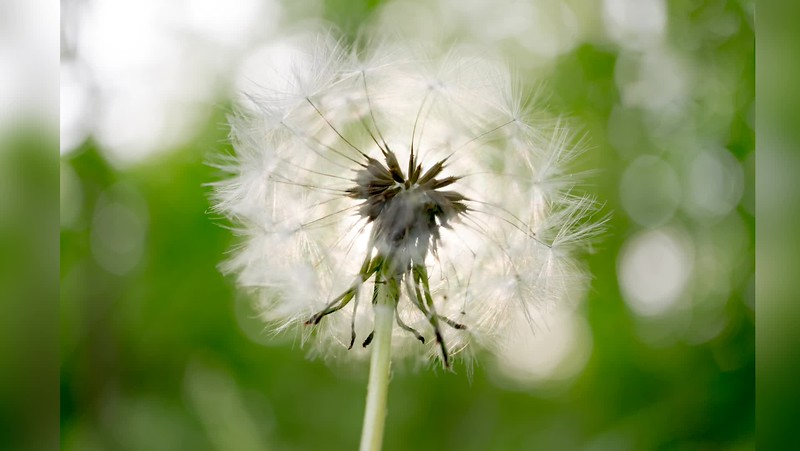 2018 Nature: Weeds, Plants, Berries, etc. Photo Slideshow