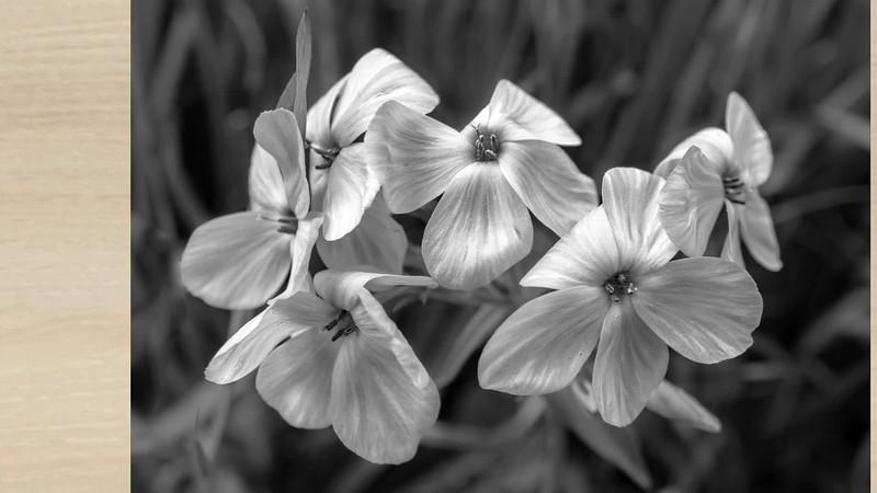 2019 Nature: Flowers & Wildflowers Photo Slideshow