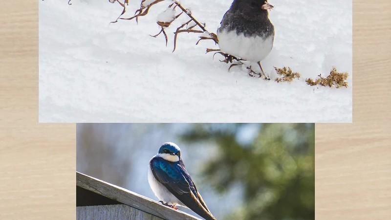 2019 Nature: Creatures Photo Slideshow